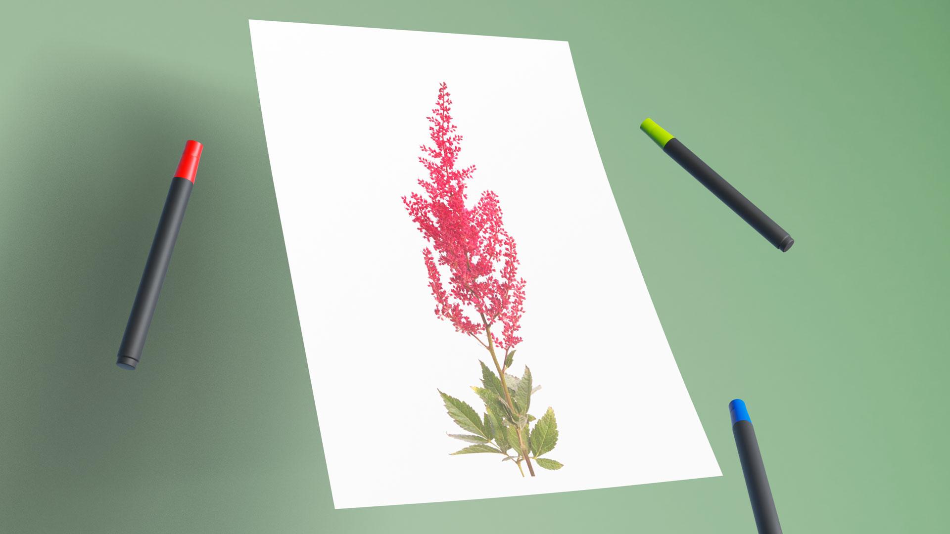 Видео мастер-класс «Как нарисовать астильбу маркером»