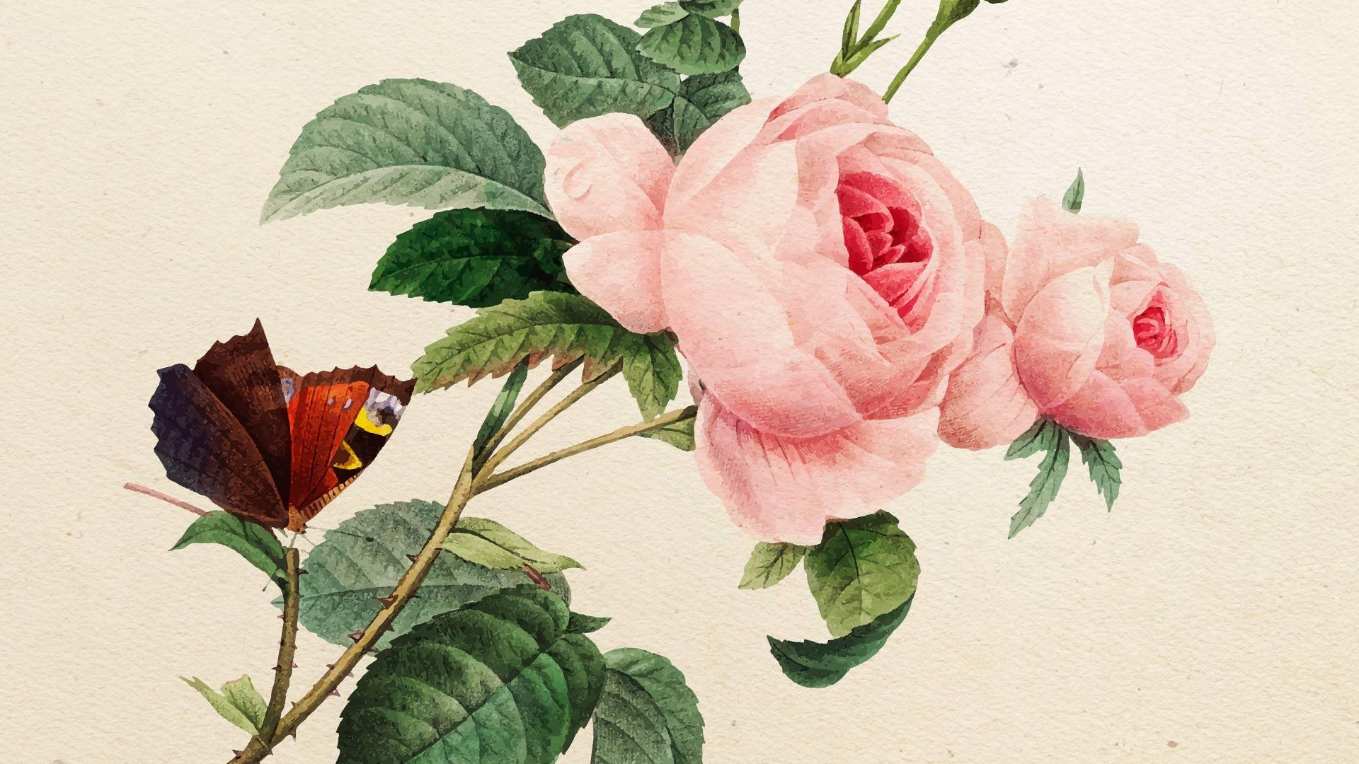 Видео мастер-класс «Как акварелью рисовать розу Дэвида Остина»